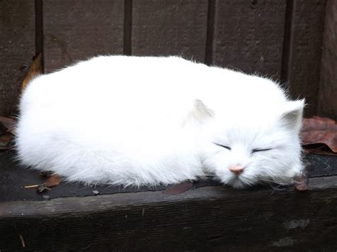 Life Like White Cat - Sleeping Realistic White Cat with