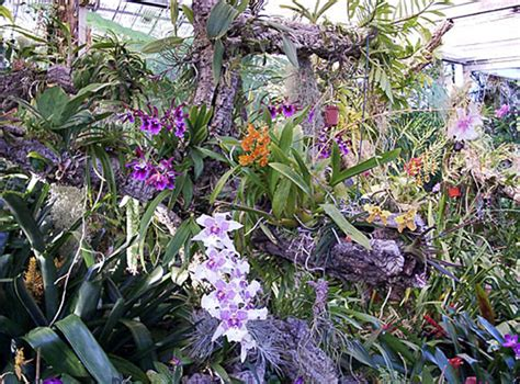Madeira: The Orchid Garden in Funchal - Monte