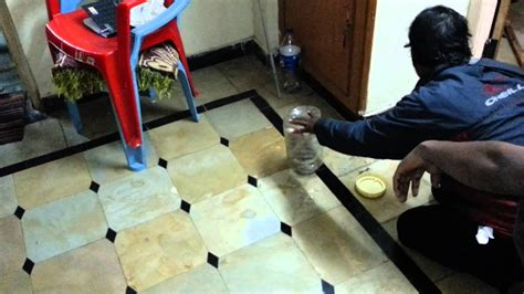 Snake (Indian cobra) in my home caught by friends - YouTube