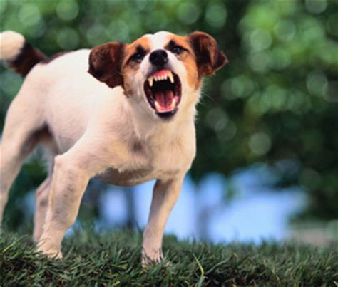 World Rabies Day Reflects Need for Rabies Awareness