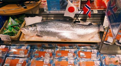 How Norwegian salmon rawed to success in Japan