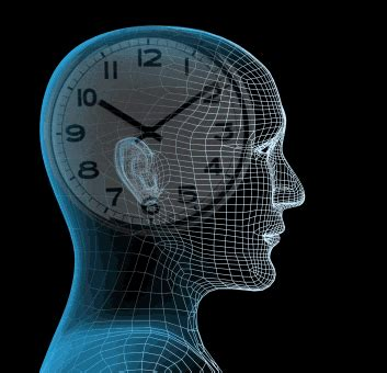 Pineal Gland, The Biological Clock   Interesting Science World