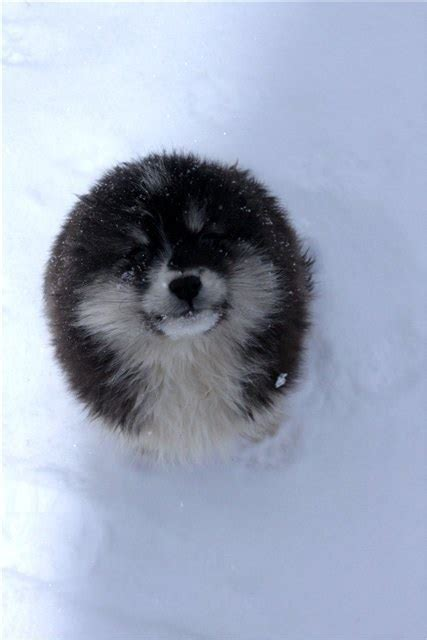 21 Fluffy Animals To Help You Relax After A Tough Day